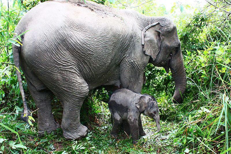 Ζώα ελέφαντες