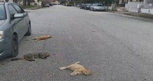 Γάτες νεκρές